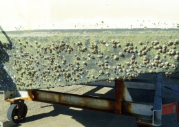 Remove antifouling the safe way with our antifouling removal guide